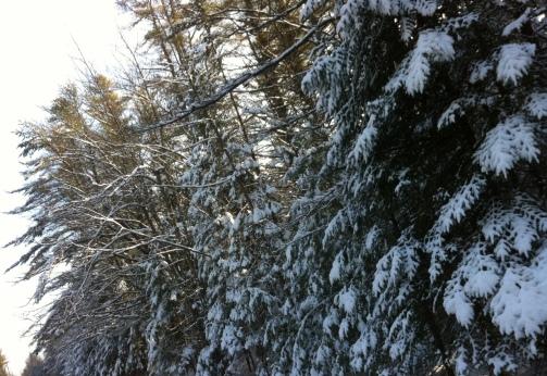 2013-SNOWYrd
