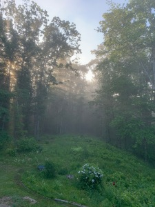 FOGGY MORNING IN MAINE